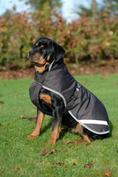 Bucas Freedom Turnout Dog Blanket 50G